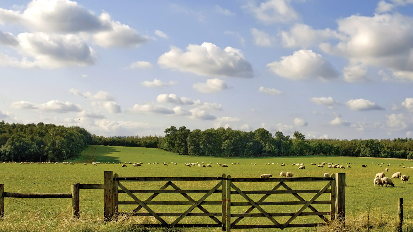 English countryside, gated field